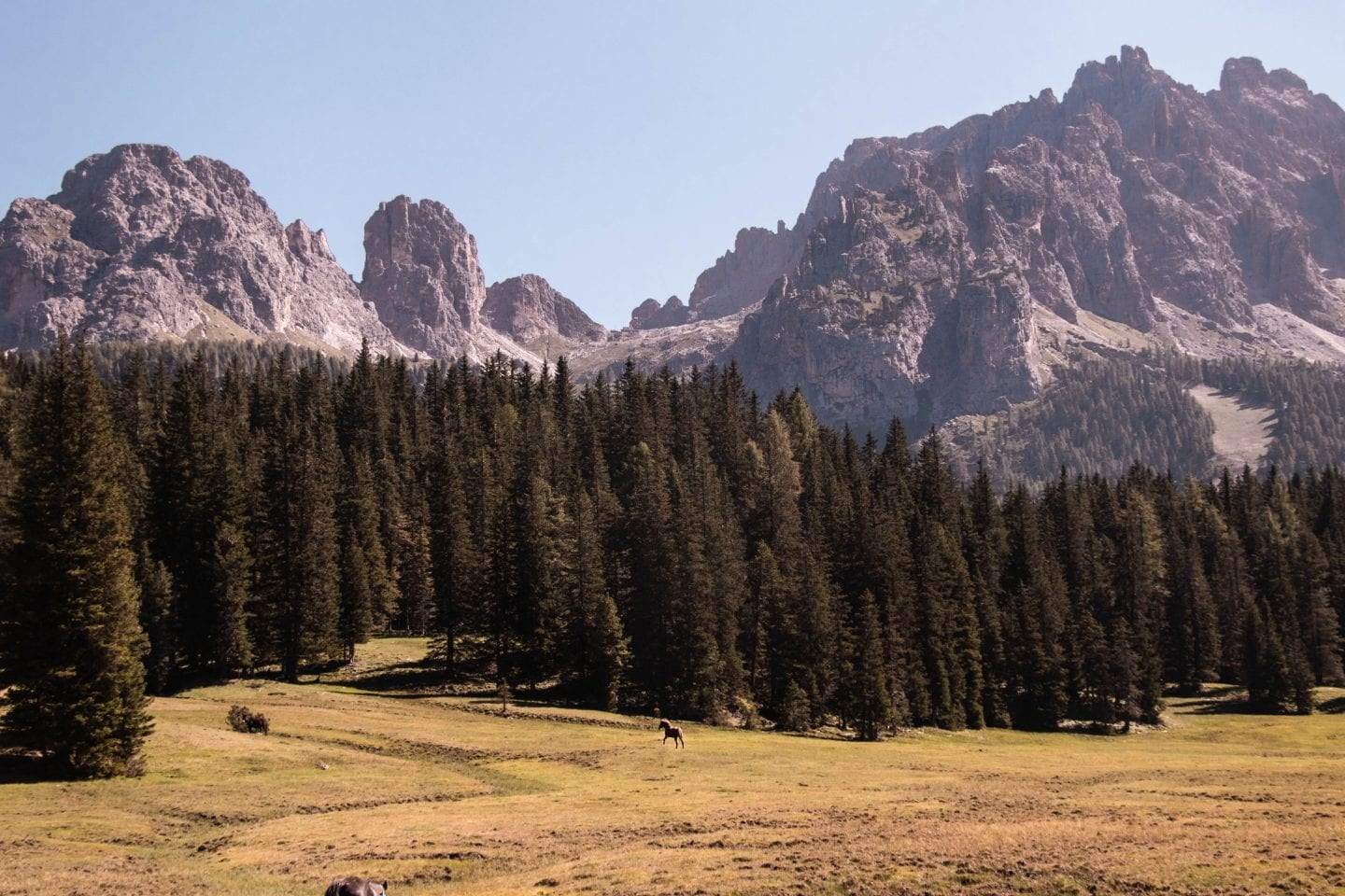 Dolomites Italy peaks and horse